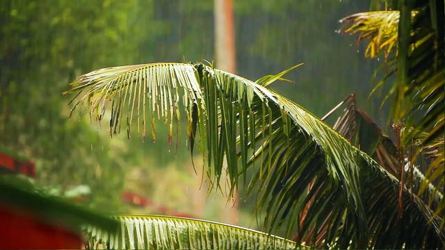 Tropical Rain Relaxation 8HR Version ...