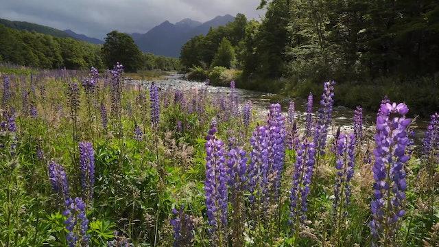 Restful Rain in NZ Milford Sound 1HR (No Music) 4K