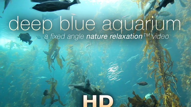 Deep Blue Aquarium 1 Hr Static Nature Relaxation Vid 1080p