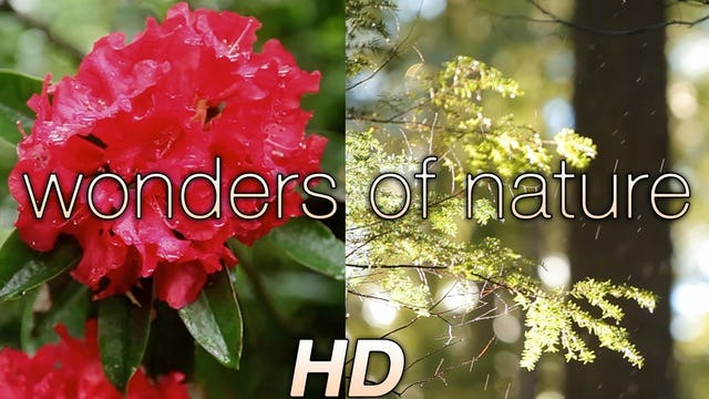 """Wonders of Nature"" (w Music) 1 HR Dynamic video"
