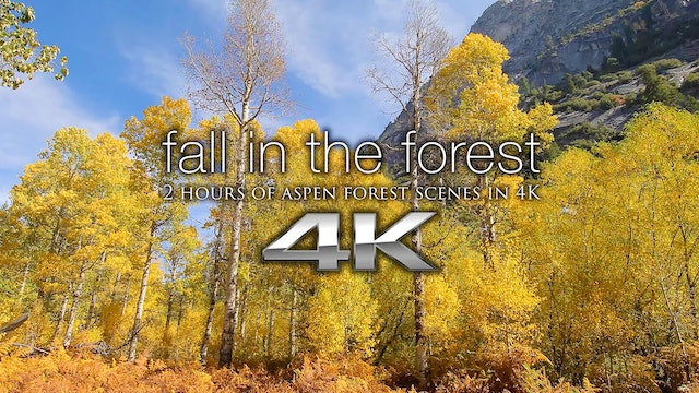 Fall in the Forest (w music) 2 HR Dynamic Relaxation Video Experience