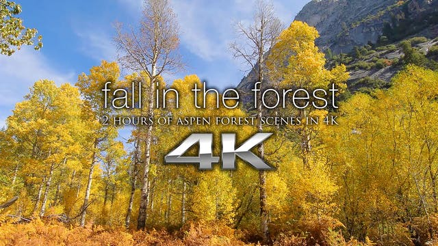 Fall in the Forest (w music) 2 HR Dyn...
