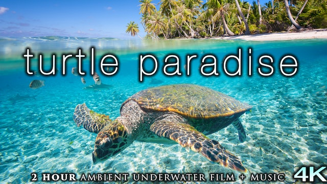 Turtle Paradise (4K) 2 Hour Undersea Film with Calming Music