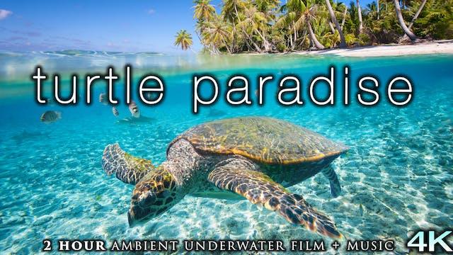 Turtle Paradise (4K) 2 Hour Undersea ...