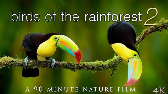 Birds of the Rainforest II 4K 90 Min ...