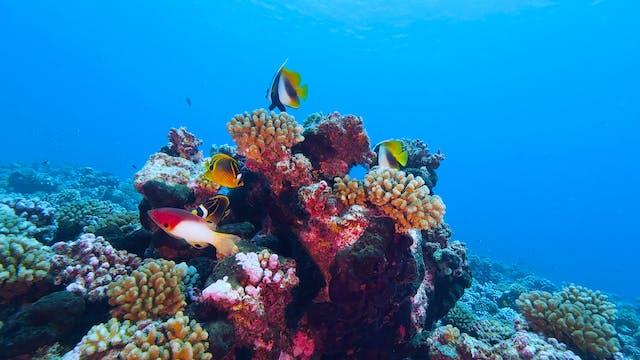 Rainbow Reef Relaxation II (9 HR Vers...