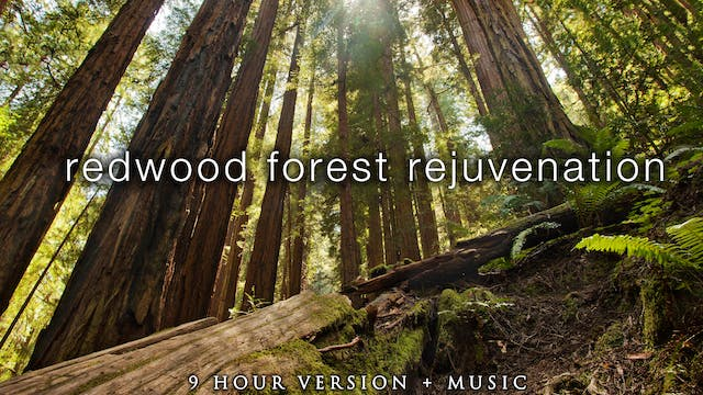 9 Hours of Redwood Forest Rejuvenatio...