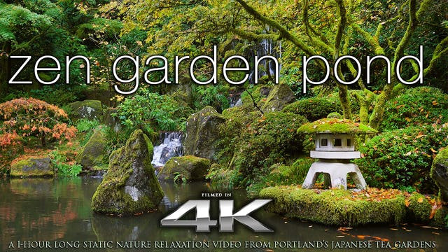 Zen garden pond 4k Nature Relaxation