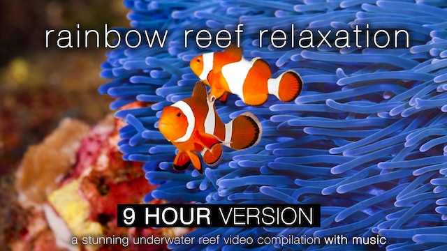 Rainbow Reef Relaxation 9 HOUR Version with Music