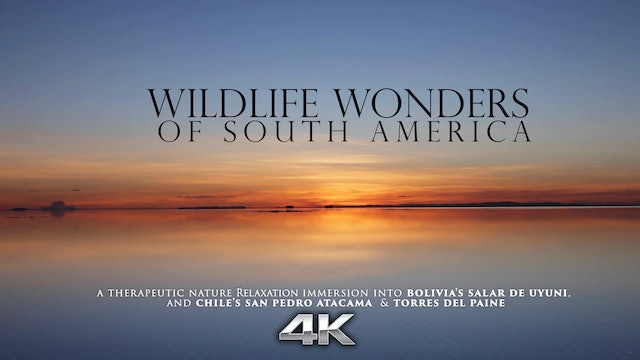 Wildlife Wonders South America (No Music) 1HR Film