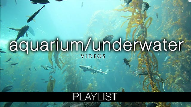 Aquarium & Underwater Videos