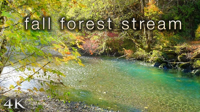 Fall Forest Stream (4K) 1 Hour Static Nature Scene | Washington State