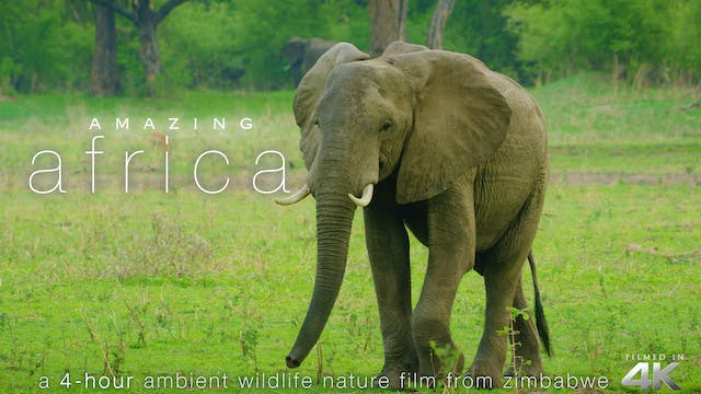 Amazing Africa 4HR Wildlife Nature Re...