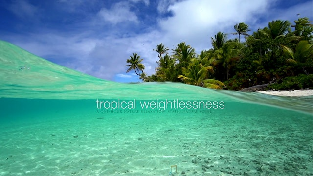 Tropical Weightlessness 1HR Static Nature Scene - Tahiti (No Music)
