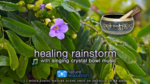 Healing Rainstorm + Crystal Bowl Music 1HR Static Scene for Relaxation