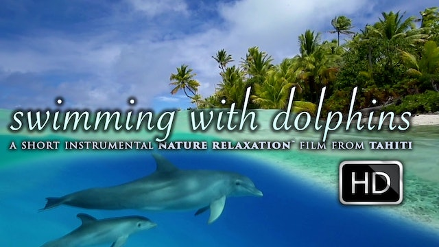 Swimming With Dolphins 10 Minute Therapy / Inspirational Video