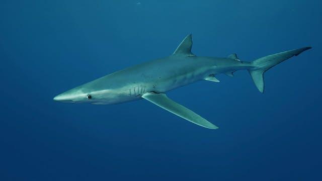 Shark Paradise (8 Hour Version)