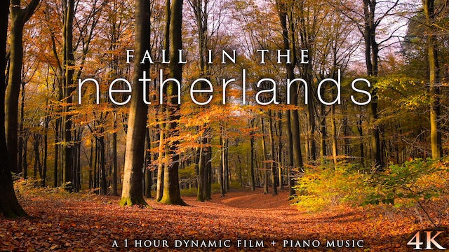 Fall in the Netherlands (+Piano Music) 1 HR Dynamic Nature Film in 4K UHD