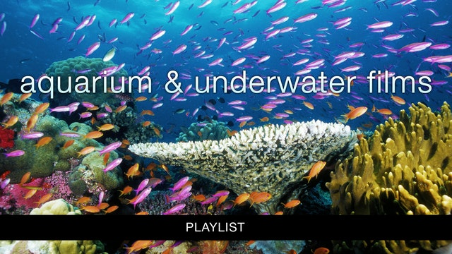 Aquarium & Underwater Films