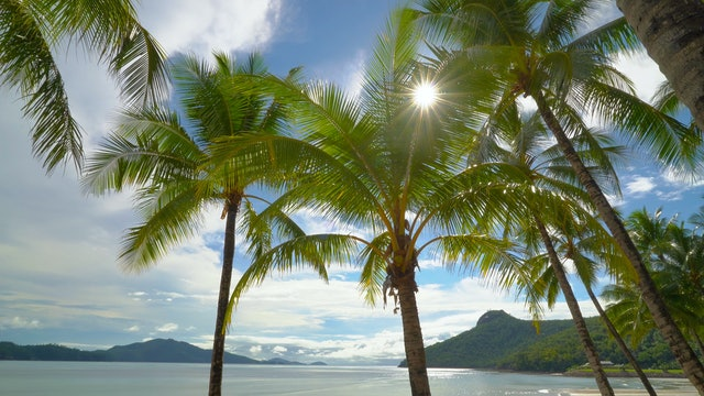 Hamilton Island Palms Australia 1 Hour Static Scene in 4K