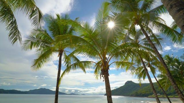 Hamilton Island Palms Australia 1 Hou...