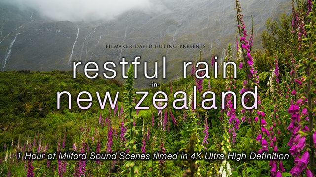 Restful Rain in New Zealand 1 HR Dynamic 4K Film (Nature Sounds Only)