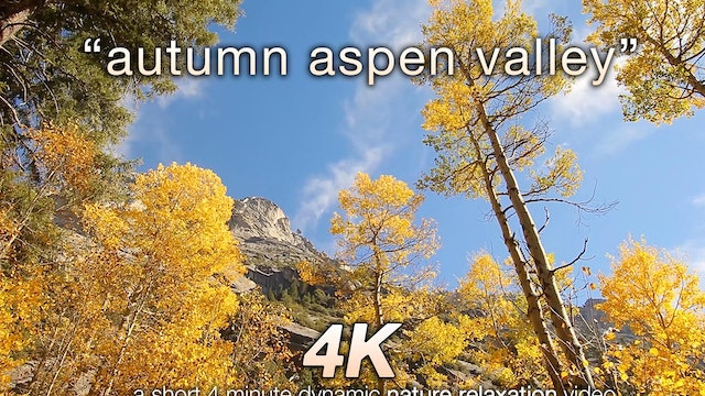 Autumn Aspen Valley Relaxation 10 MIN Music + Nature Video 4K