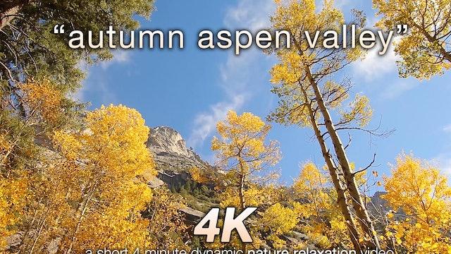 Autumn Aspen Valley Relaxation 10 MIN Music + Nature Video 4K