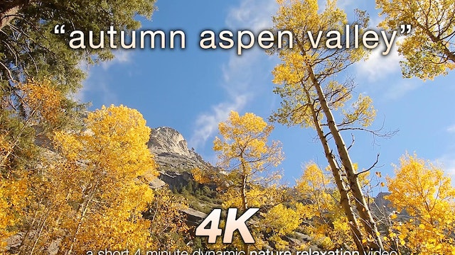 Autumn Aspen Valley Relaxation 10 MIN...