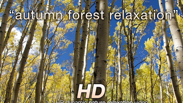 Autumn Forest Relaxation 1 HR Dynamic Nature Video