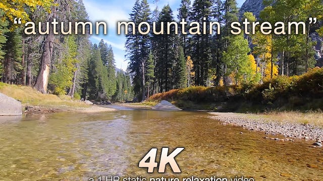 Autumn Mountain Stream 1 HR  Static Nature Video