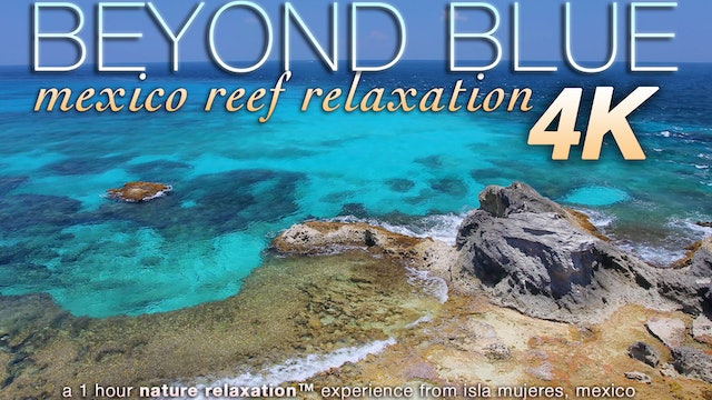 Beyond Blue (Just Nature Sounds) Mexico Reef Relaxation 1 HR Dynamic Video