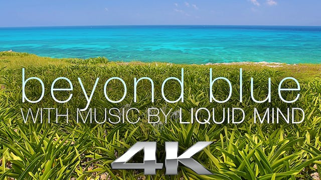 Beyond Blue: Mexico Reef Relaxation w MUSIC 1 HR Dynamic Video