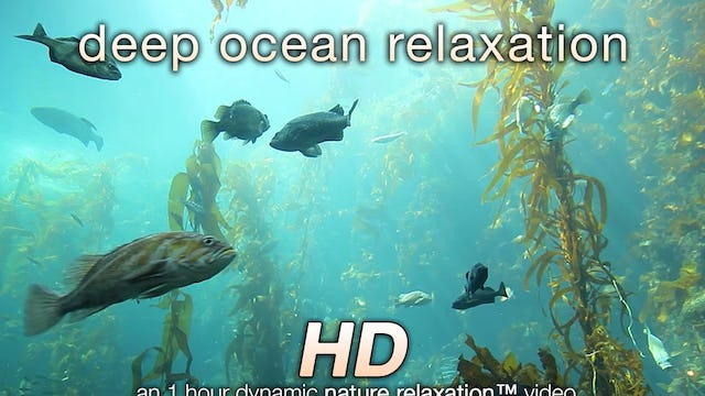 Deep Ocean Relaxation ©Nature Relaxation Video 1080p