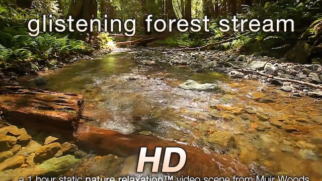 Glistening Forest Stream 1 HR Static Nature Video Scene