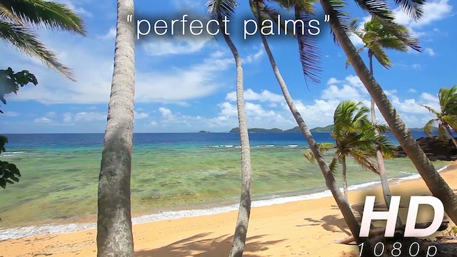 Perfect Palms 1 HR Static Nature Video