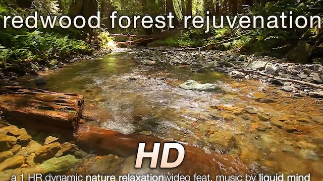 Redwood Forest Rejuvenation (w music) 1 HR Nature Relaxation