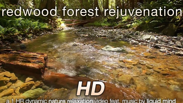Redwood Forest Rejuvenation 1 HR Dynamic Nature Video