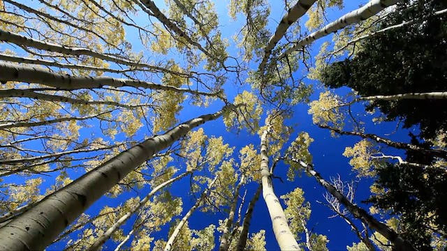 Golden Aspen Meadow 10 MIN Music + Nature Relaxation Video