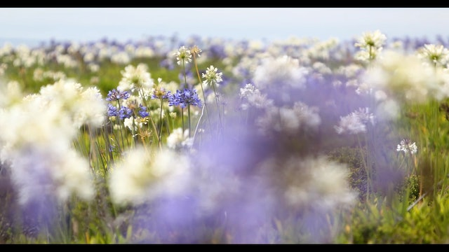 Heaven in a Wildflower 4 Minute Music Video