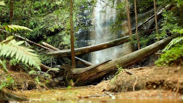 Hidden Forest Falls 1 HR Dynamic Nature Video