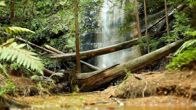 Hidden Forest Falls 1 HR Dynamic Natu...