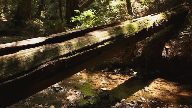 Peaceful Forest Creek 1 HR Static Nature Video