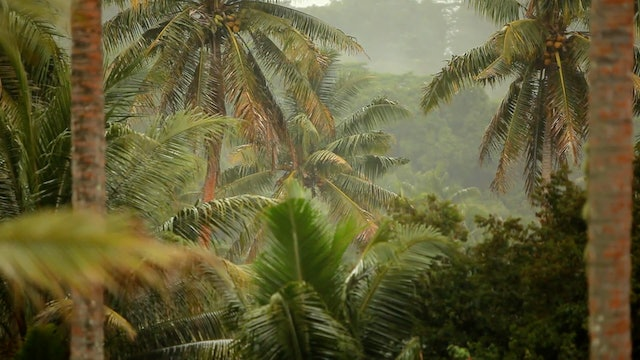 Tropical Rain Relaxation Dynamic Nature Video