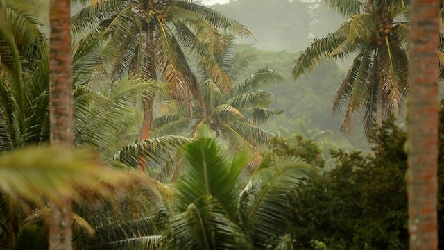 Tropical Rain Relaxation Dynamic Natu...