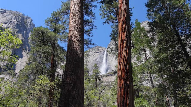 Yosemite Falls Forest Creek 1 Hr Static Nature Video