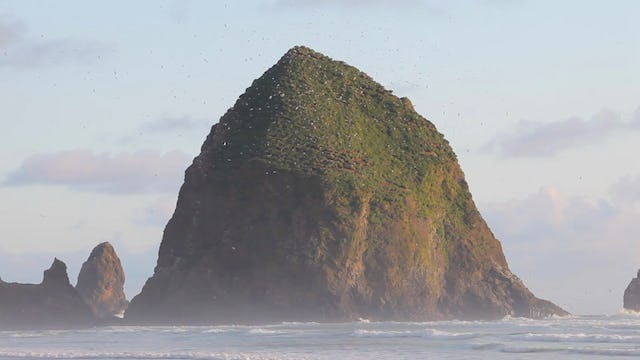 Cannon Beach Birds 1080p V2