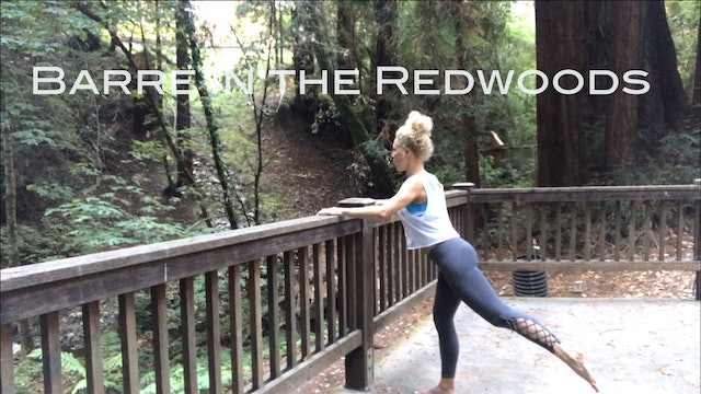 Barre in the Redwoods