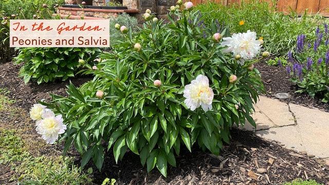 In the Garden - Peonies and Salvia