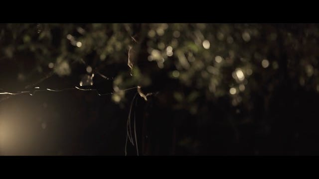 Closer Than You Know - [From A Quiet Place Beneath An Olive Tree]